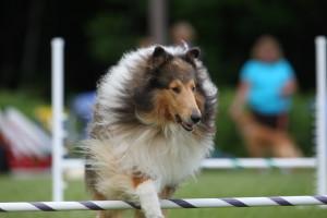 Harry agility 2010