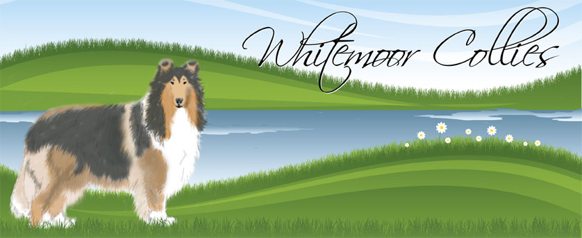 Whitemoor Collies